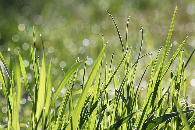sianie trawy