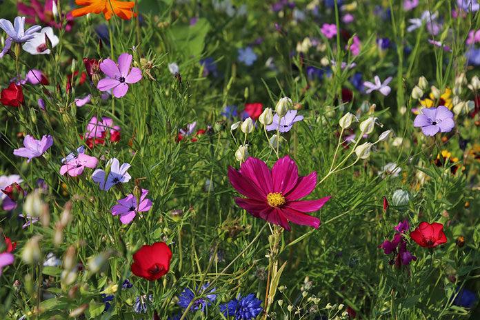 Projekt ogrodu - najlepsze pomysły na ogród