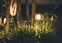 Piękno nocy w ogrodzie